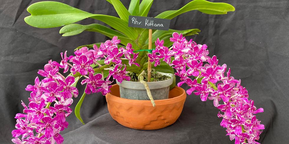 Orlando International Orchid Show