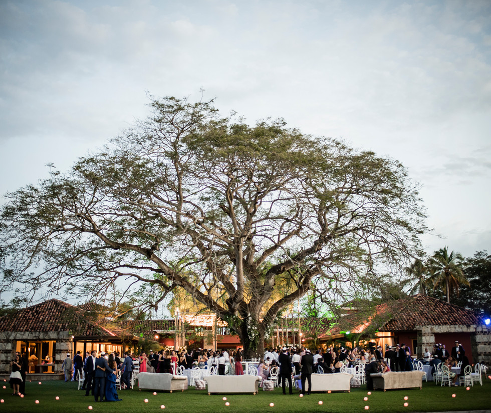 Party under the tree