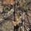 Thumbnail: Carbon Mist Compound Bow