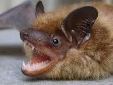 Expert Bat Removal Charlotte