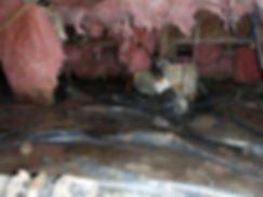 animal damage insulation