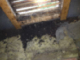 bat guano removal charlotte