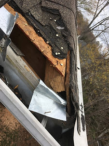 Wildlife Roof Damage Charlotte NC