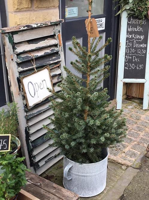 Mini doorstep potted Christmas tree