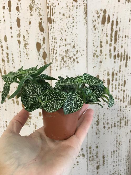 Cute houseplants x 2