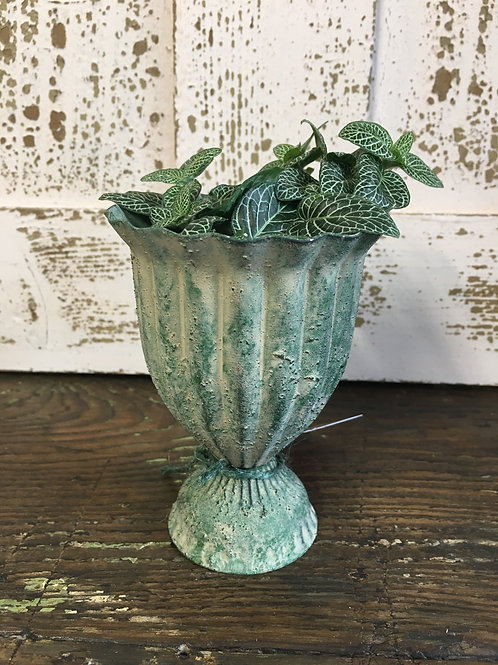 Antique green plant pot with a cute Fittonia