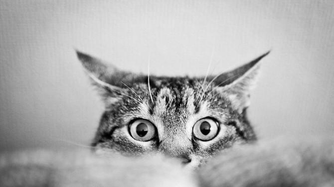 Agosto, mes de los gatos!!!!