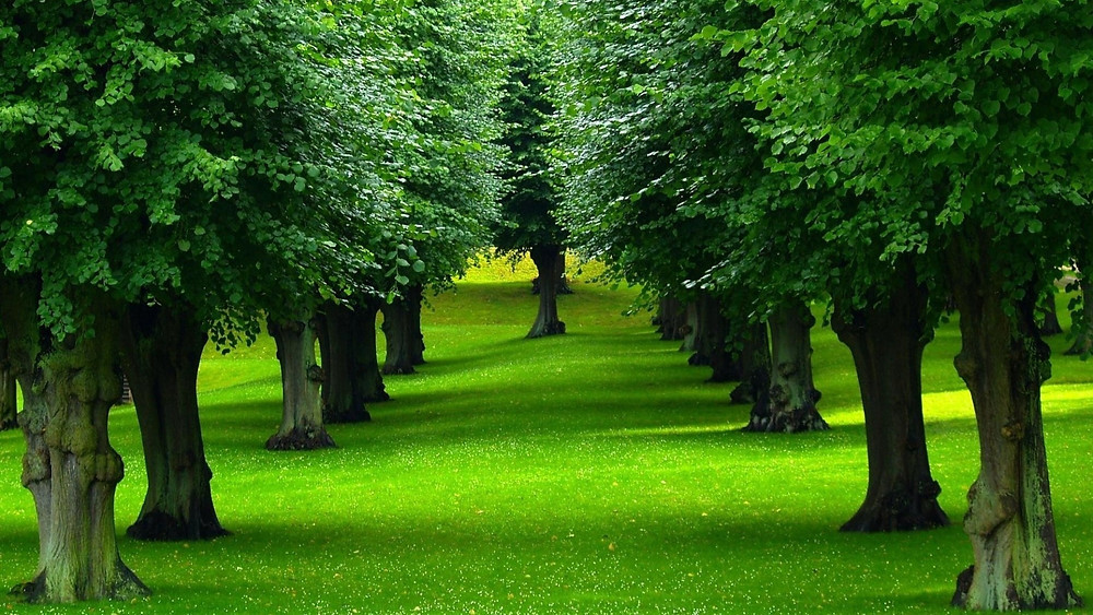 trees-picture[1].jpg
