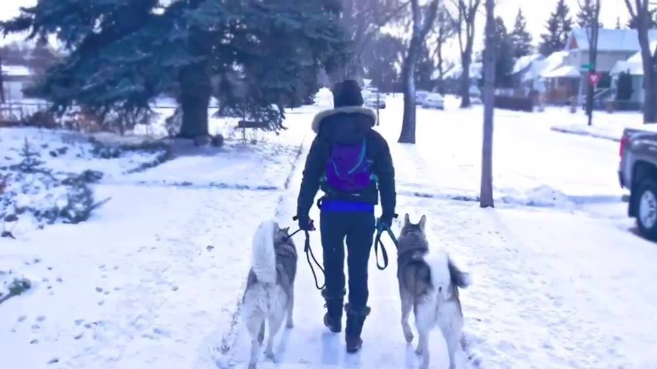 I'm so proud of how far Timber has come! From being reactive, anxious, and pulling on the leash- to this calm, fulfilled, happy husky🐶! It's amazing how a walk can transform the relationship you have with your dog and the rewarding experience you gai