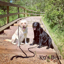 Let's do stairs and work those touché!😯_#yegdogs #yegdogsofinstagram #yegdogwalker #dogsofinstagram #dogs #hikingwithdogs #edmontondogs #edm