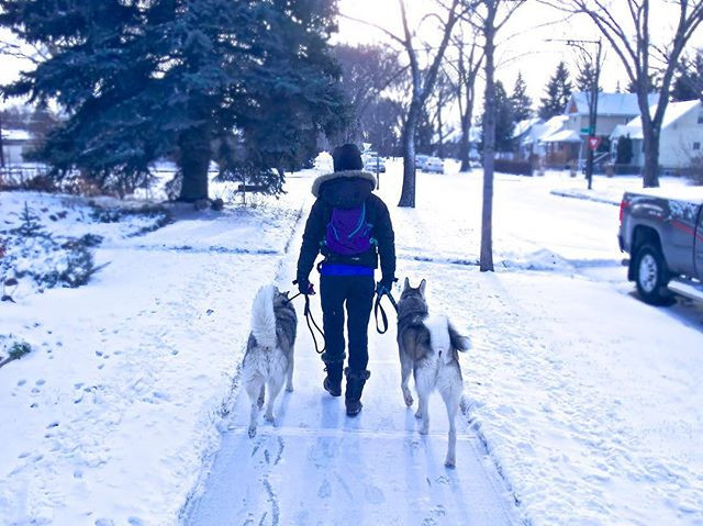 Cold season is here, but dog walking is all year long! Structured walk is one of the best activities for your dog's mental and physical fulf