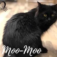 Moo-Moo