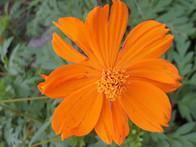 Flor de Las Mariposas en Las Galeras