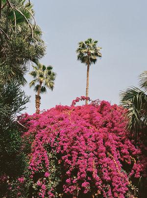 Marrakech Lala Serrano
