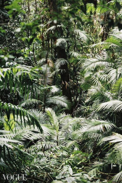VOGUE Jungle Pattern © Lala Serrano