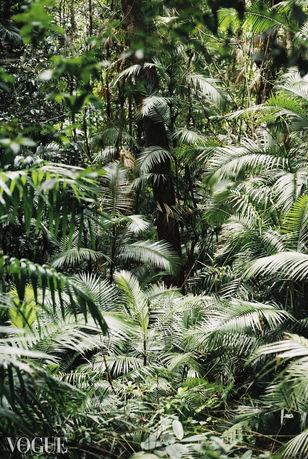 VOGUE Jungle Pattern _ Lala Serrano.jpg