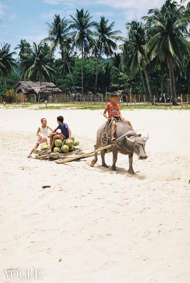 Vogue Coconuts © © Lala Serrano
