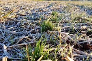 RS terá prejuízo na colheita em razão do clima, admite secretário da Agricultura