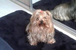 Justiça condena homem que matou cão com chute em Porto Alegre