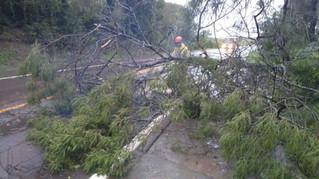 Temporal derruba árvores, inunda vias e deixa consumidores sem luz em Carlos Barbosa e região