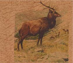 Elk Herd_1007