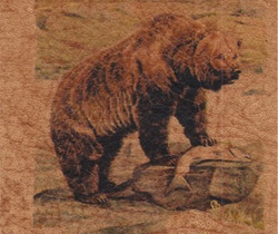 Grizzly Bear_1009