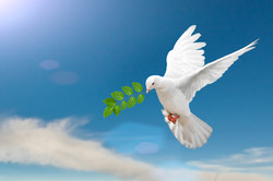 Dove with Fig branch