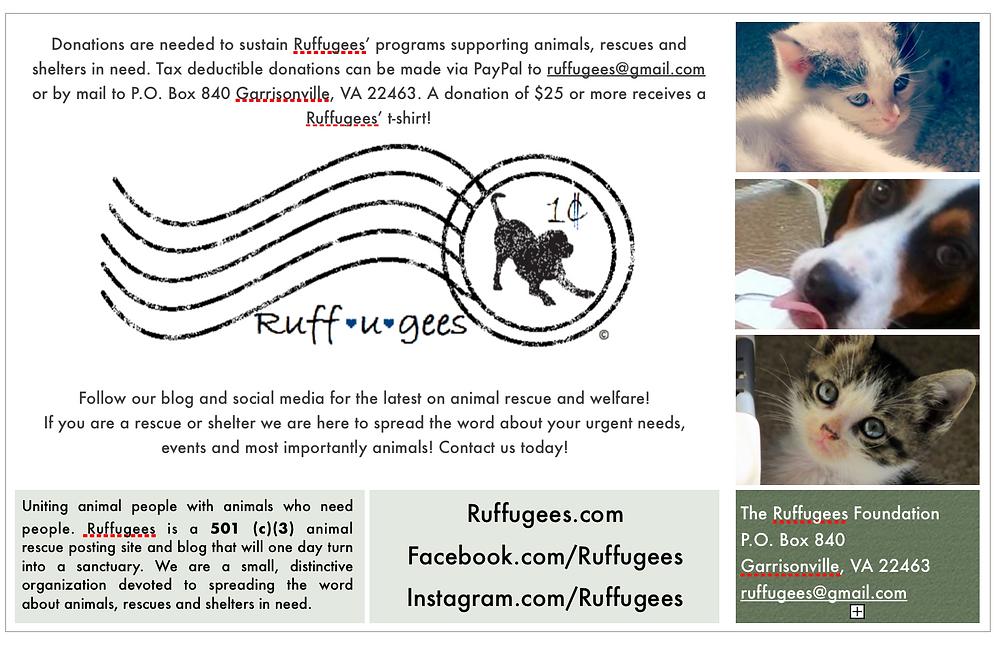 Ruffugees Flyer