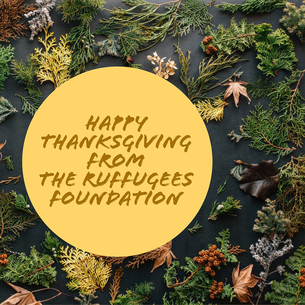Happy Thanksgiving from The Ruffugees Foundation
