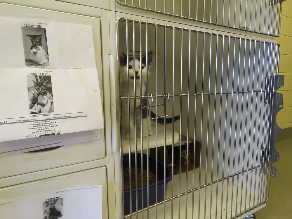Kitty in the main lobby