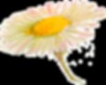 ромашка (1).png