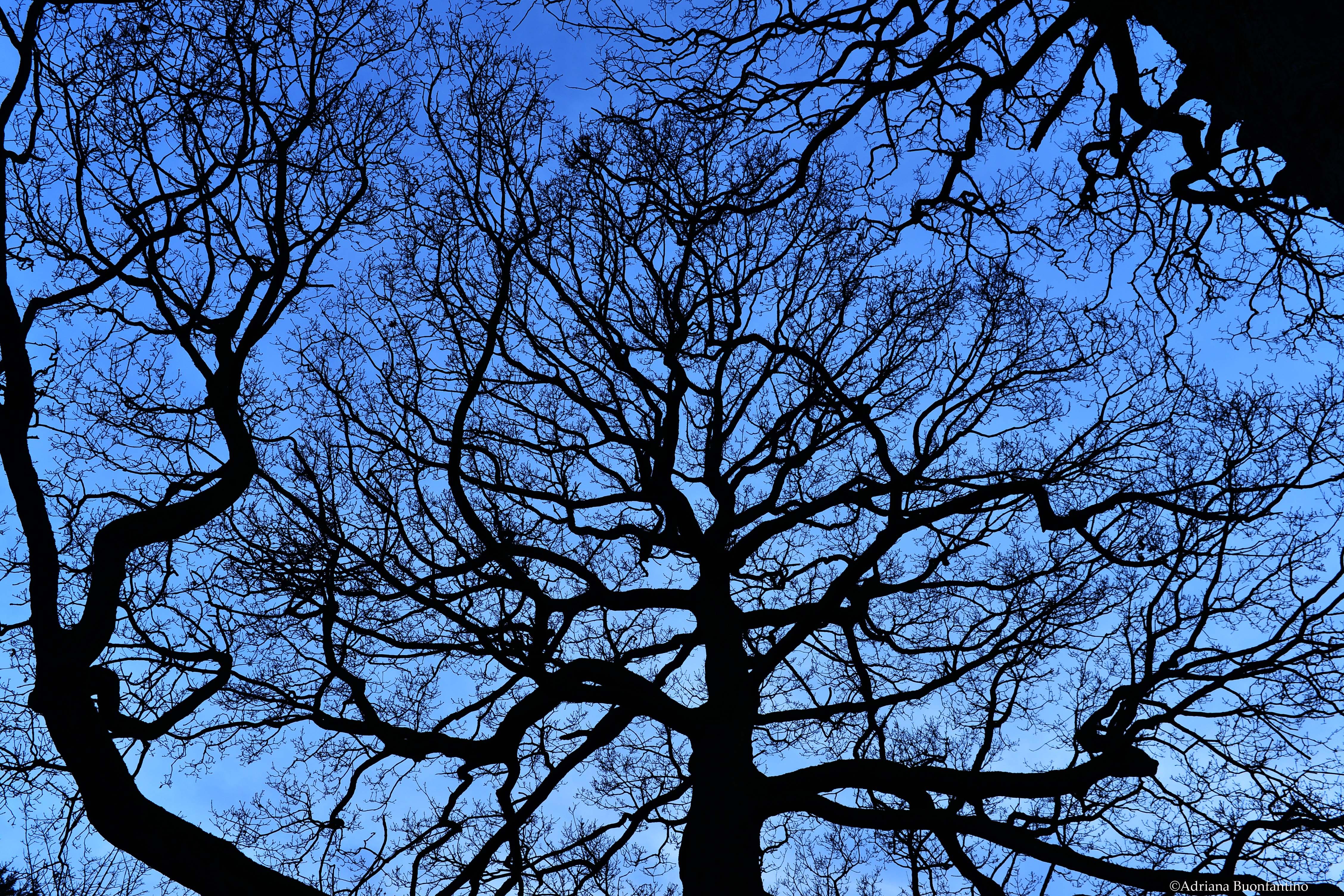 Sky's roots