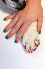 a human hand and a dog paw with painted nails and gayze decals