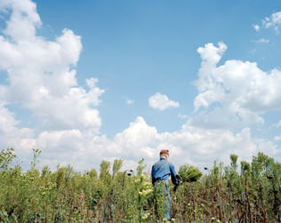 13-The Harvest_Project.jpg