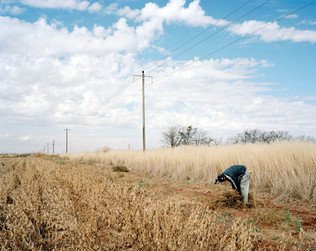 20-The Harvest_Project.jpg
