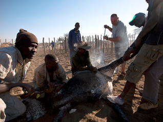 _MG_3243-Jaco and the Himba_Commission.jpg