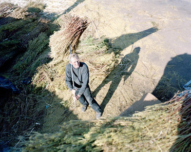 08-The Harvest_Project.jpg