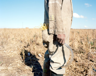 01-The Harvest_Project.jpg