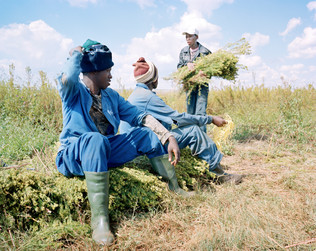 25-The Harvest_Project.jpg