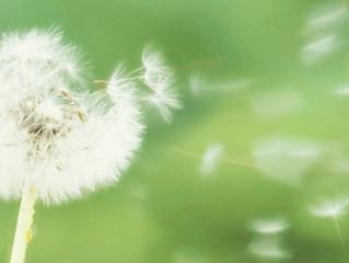 Top 5 ways to breathe easier during allergy season