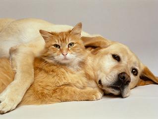 Nossos Pets também envelhecem!