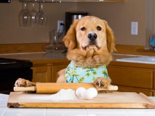 A importância dos alimentos na saúde dos nossos animais de estimação.