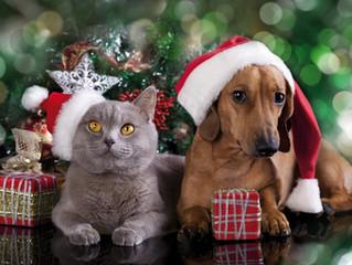 Cuidados com seu Pet nas festas de Final de Ano