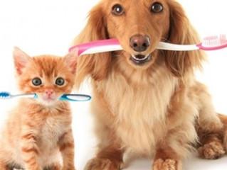 Doença Periodontal em Cães e Gatos