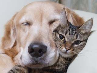 Posse responsável de animais de estimação