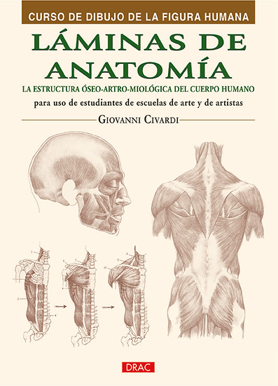 Láminas de anatomía - Dibujo