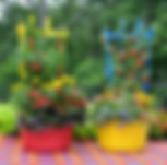 container veg plants.jpg