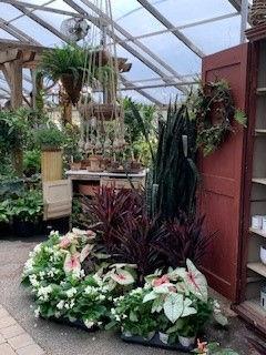 Greenhouse (3) 06 2021.jpg