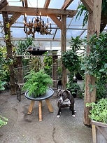 Greenhouse (6) 06 2021.jpg
