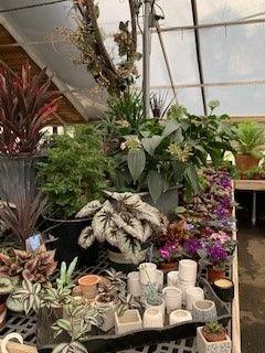 Greenhouse (18) 06 2021.jpg